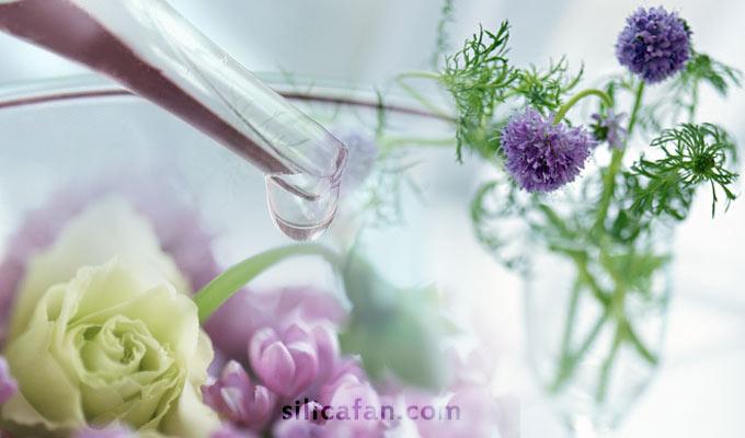 シリカで雑菌繁殖を抑制!植物・生け花を長持ちさせるコツ