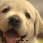 珪素・シリカは犬・猫などペットにも飲ませていいの?